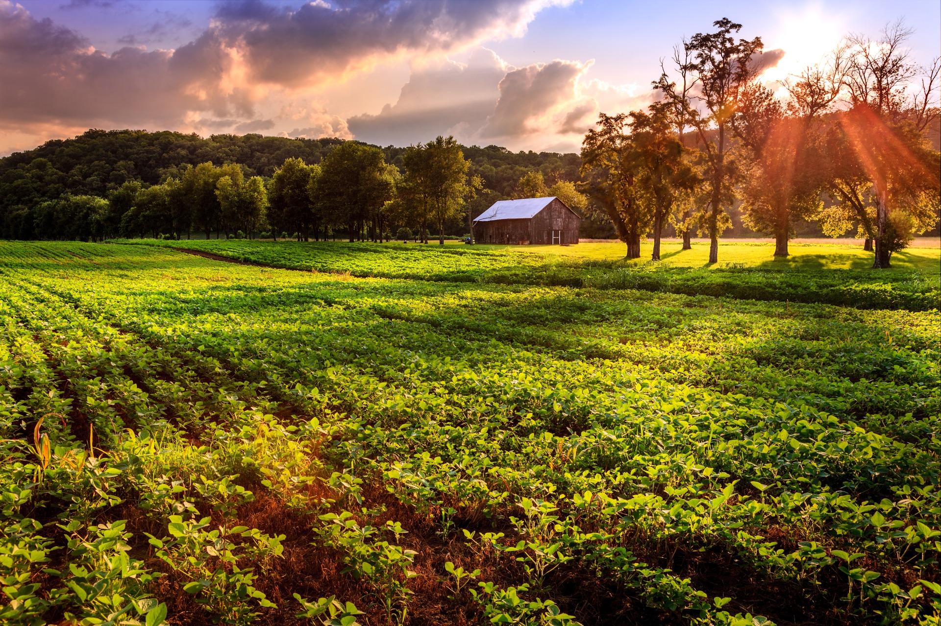 Pochodzi z małych gospodarstw ekologicznego podlasia